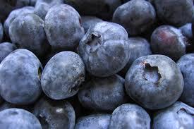 buy blueberry oil