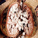 baobab-seed