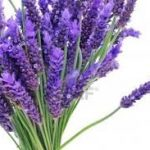 lavender for toddler insomnia