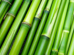 bamboo oil