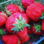 pesticides in strawberries